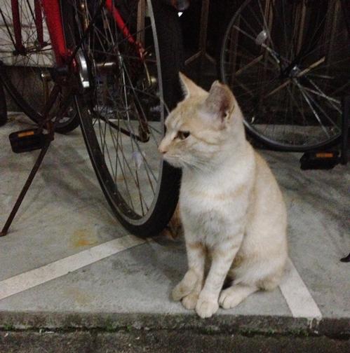 cat1.2trueme.jpg