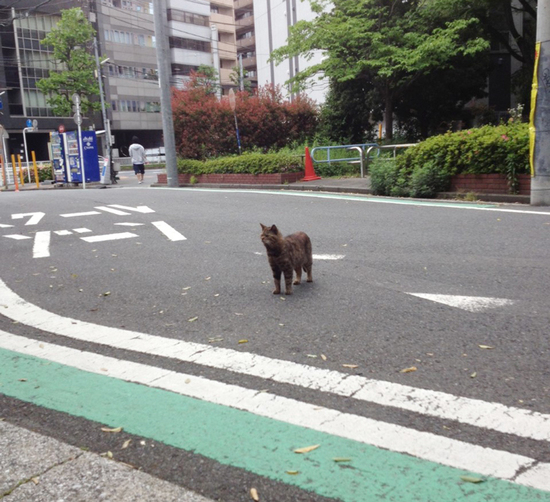 new-cat-2019-yokohama.jpg